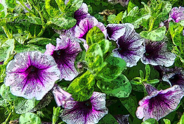 Flower_2587-2_copy