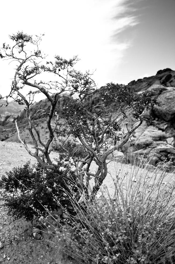 Desert_5023