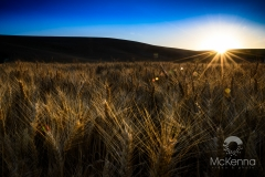 Sunset_over_the_Palouse3741